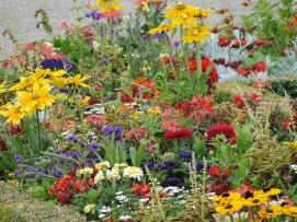 flower-field-1559464_640.jpg