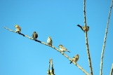birds-758121_640.jpg