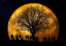 tree-66465_640.jpg