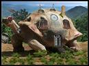 turtle-600027_640.jpg