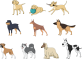 animals-1454214_640.png