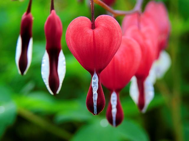blossom-1425870_640.jpg