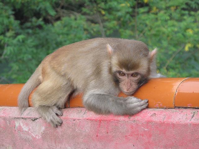 monkey-1483870_640.jpg