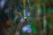spider-1540878_640.jpg