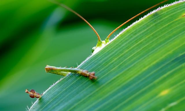 grasshopper-193721_640.jpg